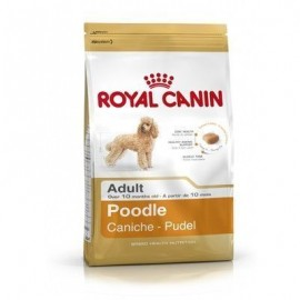Royal Canin Adult Poodle Caniche