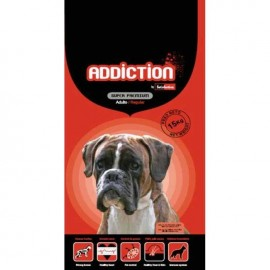 Addiction Adulto Regular