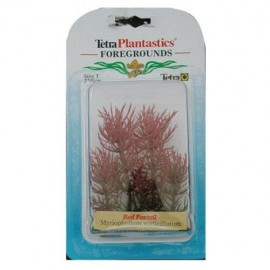 Planta Tetra Red Foxtail Foreground 5 cm